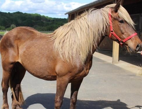 Leonie Adoptez Equide Avec La Spa Adopter Un Animal Animaux Abandonnes Animaux