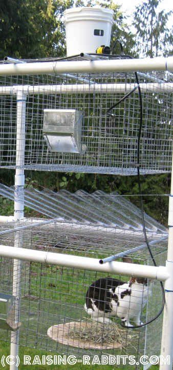 Rabbit hutch plans rabbit hutches and rabbit on pinterest for Pvc rabbit cage