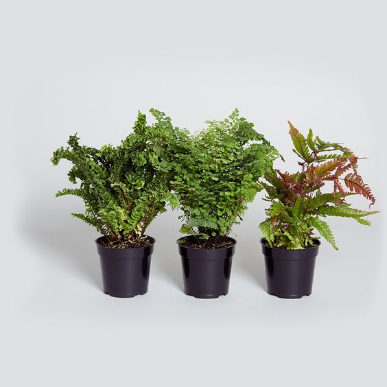 The o 39 jays pets and products on pinterest for Non toxic ferns