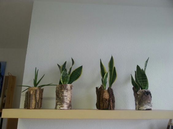 Altglas bepflanzt