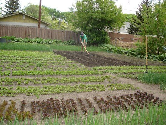 Online training guide provides future farmers tools to profit from small plot intensive farming - Profitable crops small plots ...