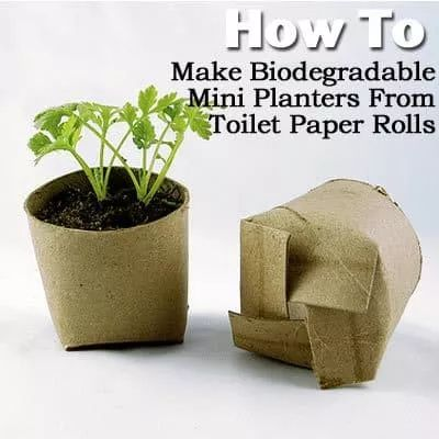 Biodegradable Mini Planters From Toilet Paper Rolls