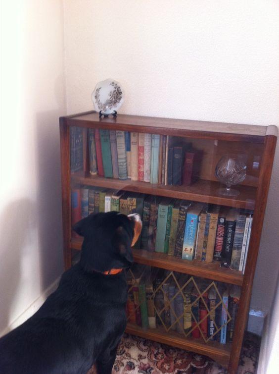 Best dog blogs, ever - Alfie's Blog