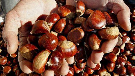 Galicia es la principal comunidad productora de castañas