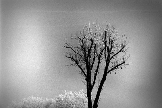 Photo #20981970 by docker.