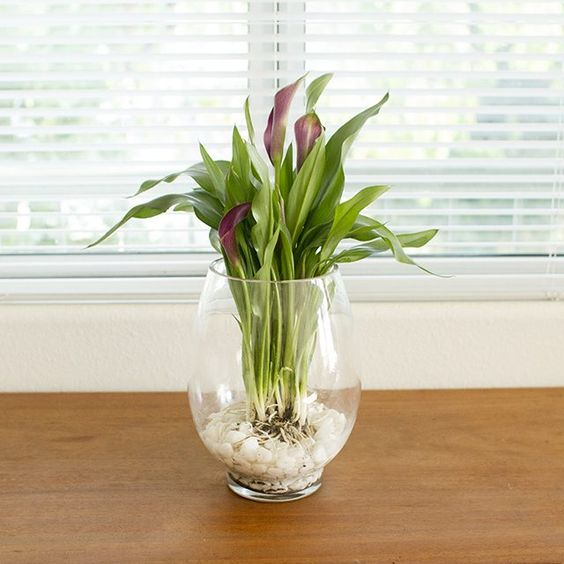 How to Grow Bulbs in a Glass Vase - I'm doing this for the winter this year!
