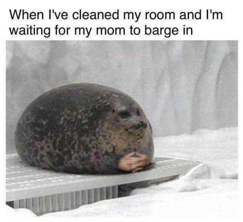 32+ Fresh Animal Memes That Are Nothing But Funny