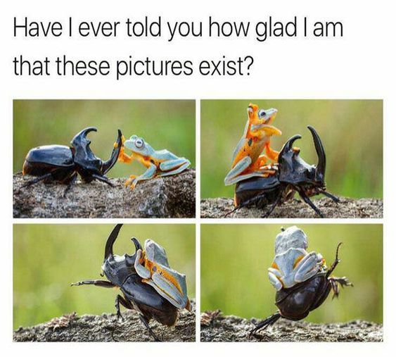 Top 20 Funny Animal Memes Jokes