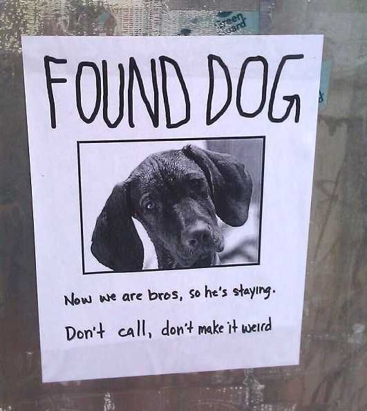 found dog funny sign