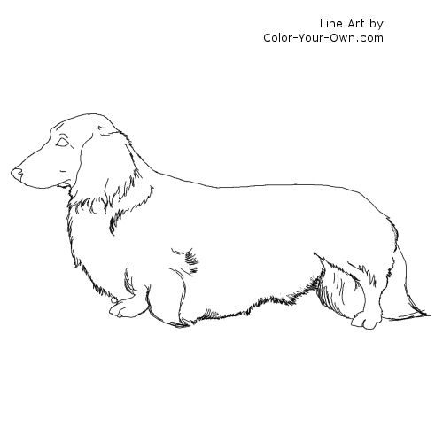 Line Drawing Dachshund : Longhaired dachshund line art coloring pages