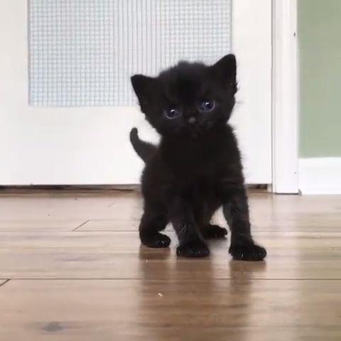 Cuteness overload 😻💞 From IG : @raleighkittens #cat #kitten #cats #funnycats #catsfunny ** No copyright infringement intended! ?? DM me in regards   -  #Cuteness #Overload