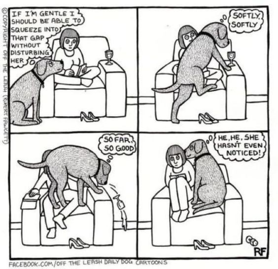 Sometimes living with a dog can be a little complicated.