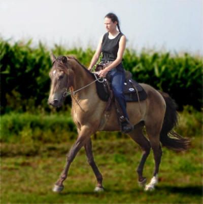 good info on gaited horses including video