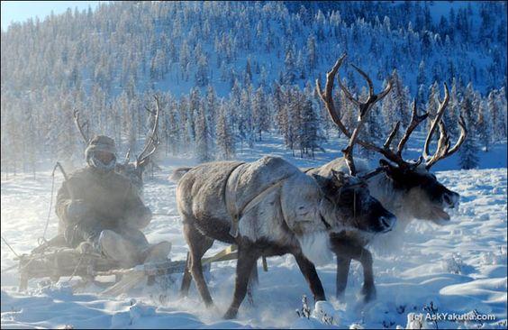 on the reindeers back, Yakutia