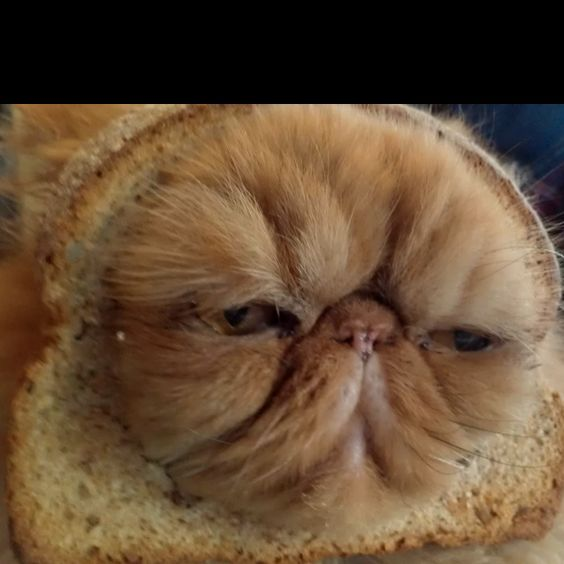 inbred animals - photo #6
