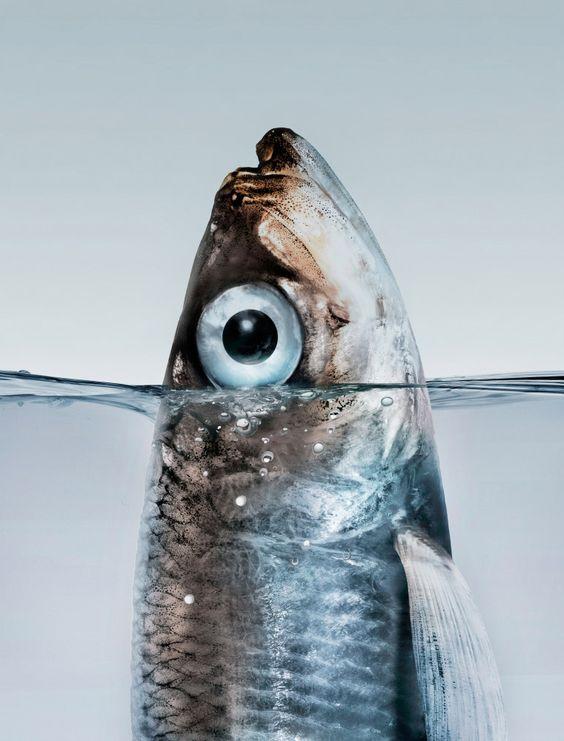 Photo by perttu saksa for university of helsinki parfait for Fish eyes in paint