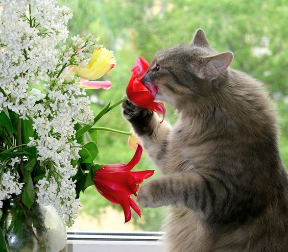 Smelling the flower before I tear it up.....