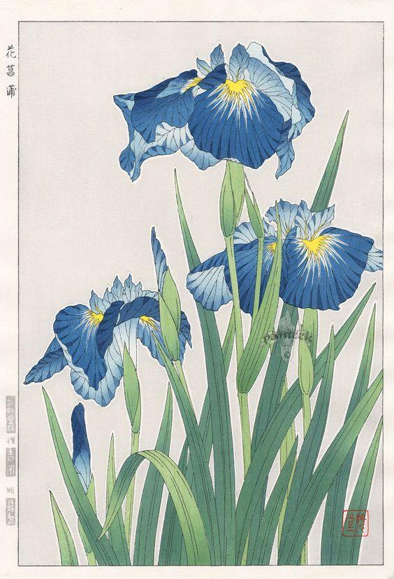 Iris from Shodo Kawarazaki Spring Flower Japanese Woodblock Prints