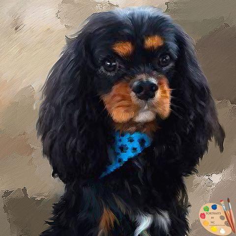 King Charles Spaniel Dog Portrait 443 King Charles Spaniel Dog Portraits Spaniel Dog