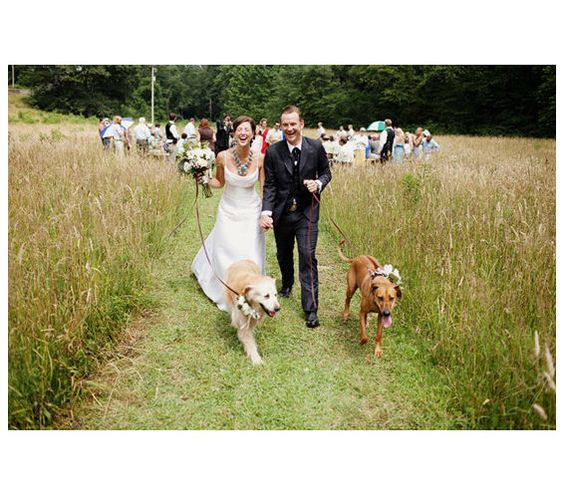 wedding ideas for dog lovers ideas your and puppy on 27910