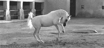 Horses - Comunidad - Google+