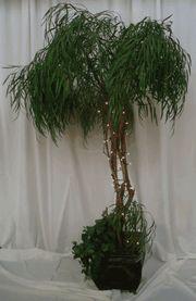 tree option