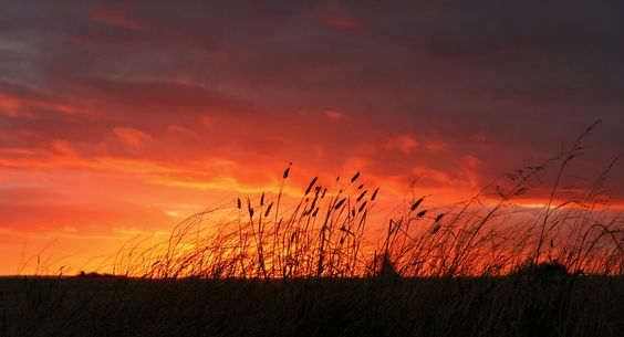 like a grass on fire...sunset by alf M, via 500px