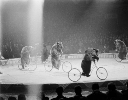 bears on bicycles: Vintage Circus Photos, Photos Black, Vintage Photos, Circus Bears, Vintage Photographs, Vintage Pictures, Vintage Photography, Bicycle