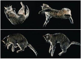 Fotos de Família: Curiosidades Sobre Gatos: Quedas.