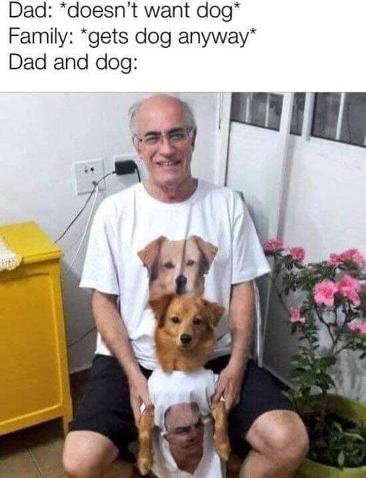 Dads And Dogs Dad Meme Dog Memes Pokemon Funny