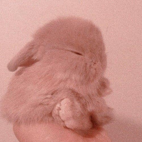 Bunny Habbit Cute Easthetic Pink Aesthetic Brown Aesthetic Bunny