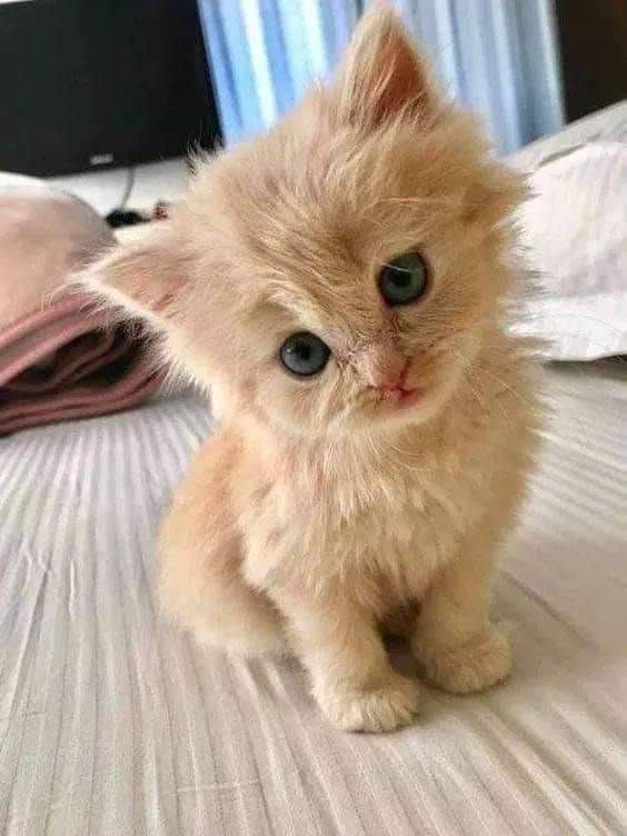 Purely Positive Tiny Kitten Collection Cute Animals Cute Cats Cute Baby Cats