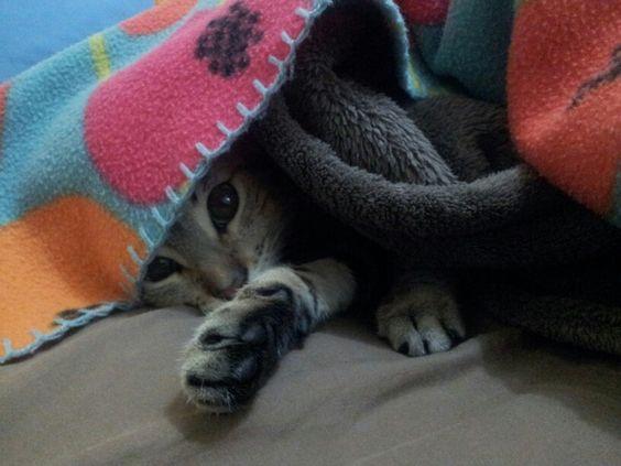 Me encanta esconderme
