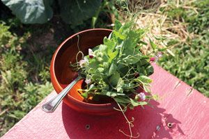 Winter Cover Crops (Mother Earth News)