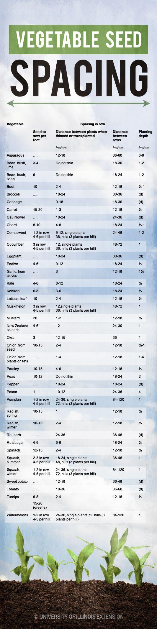 Useful Chart! Vegetable Seed Spacing #garden #gardening