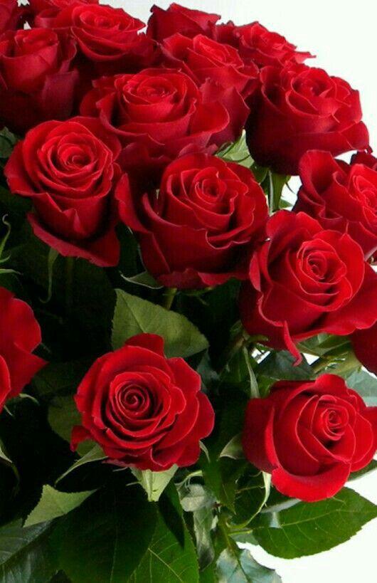 30++ Ramo de rosas hermosas y bellas inspirations
