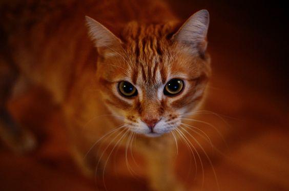 artesanato temático gatos - Pesquisa Google