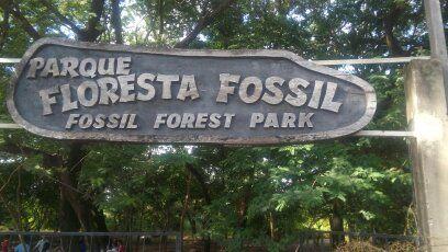 Floresta Fossil em Teresina-PI