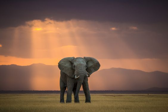 THE WINNERS & FINALISTS IN THE WORLD ELEPHANT DAY PHOTO COMPETITION Pieter Jocobus Ras