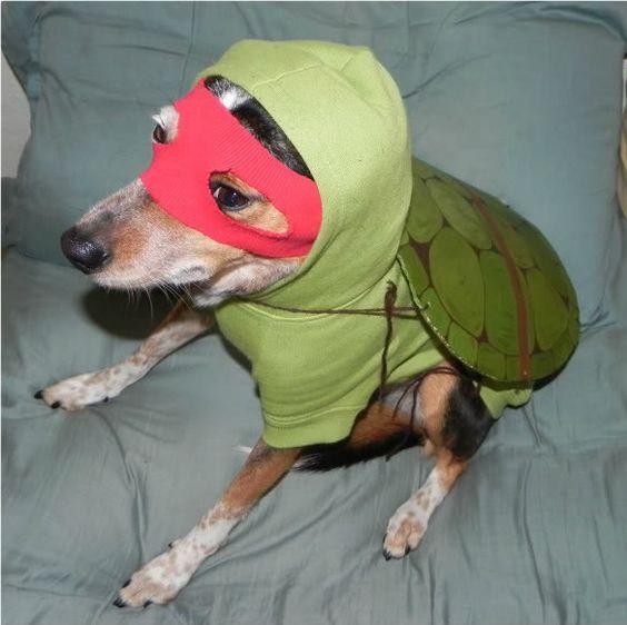 ninja turtle dog costume | Halloween Ideas | Pinterest