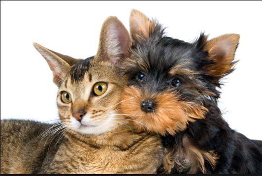 Ist Das Schon Jedem Bekannt Mietrecht Haustiere Durfen Nicht Verboten Werden Susse Hunde Und Katzen Tiere Hund Haustier