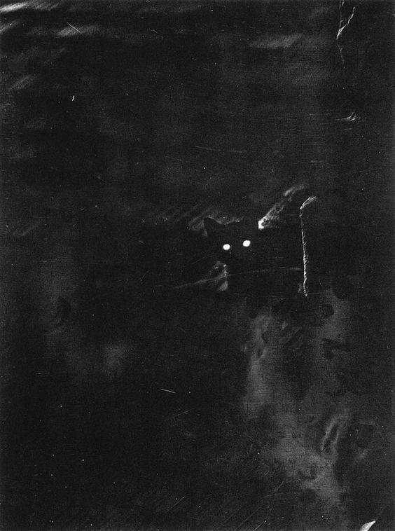 """Cat's eyes""..Nocturnal excursion - 1937..Credit: Emo Vadas."