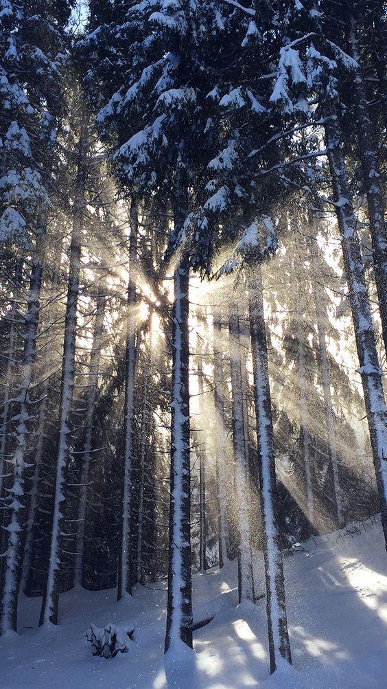 Get Wallpaper: http://bit.ly/2ifxxIv nm60-wood-snow-winter-light-sun-nature via http://iPhone7papers.com - Wallpapers for iPhone7 and iPhone7plus
