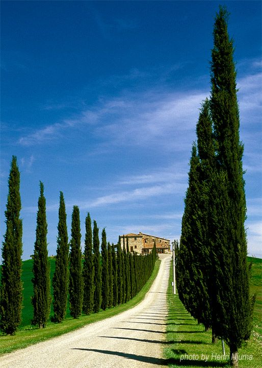 Tuscany, Val d'Orcia or Valdorcia ~ a region characterised by gentle, carefully cultivated hills occasionally broken by gullies and by picturesque towns and villages.