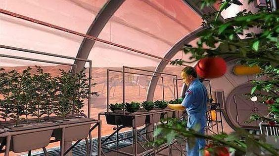 La NASA se propone cultivar plantas en la Luna como soporte vital para los futuros colonos. En concreto, quiere hacer crecer unas semillas d...