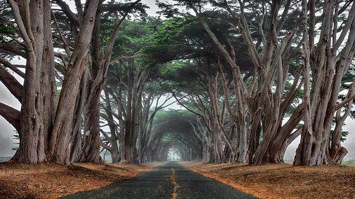 Jinnita Djinn - Google+ - Foggy Cypress by Jeff Ries