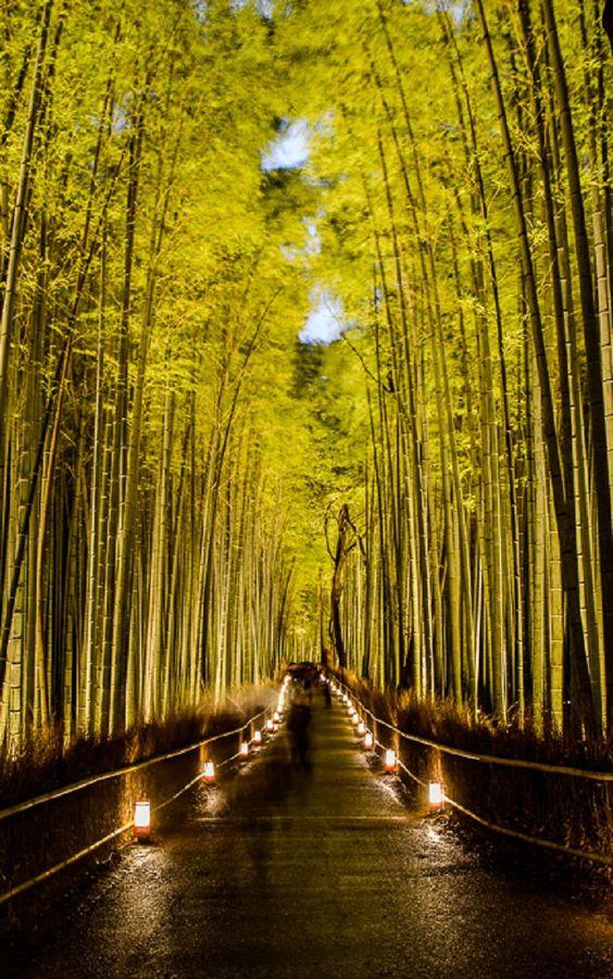 El bosque Sagano de bambú de Arashiyama, Japón