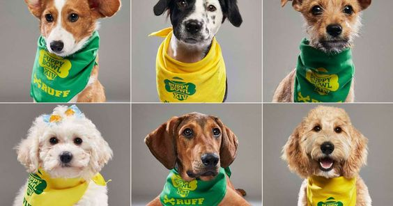 Puppy Bowl 2018: Meet the starting lineup