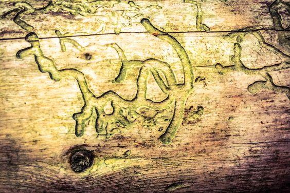 La subtile écriture des arbres