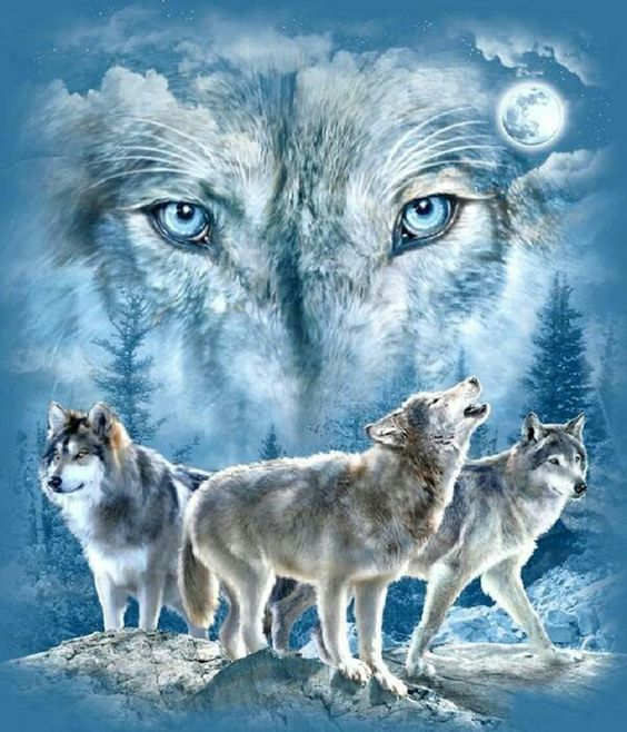 Amazing Wolf: Cool Picture With Amazing Color Blue